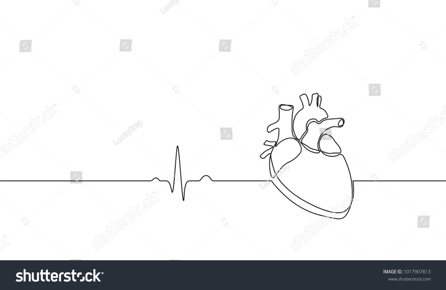 Line Art Heart Outline : Single continuous line art anatomical human stock vector hd