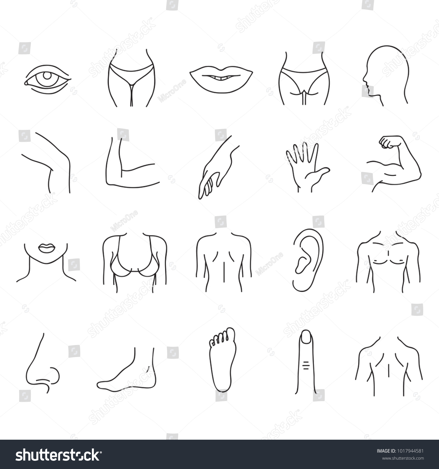 Line Human Male Female Body Parts Stock Vector (Royalty Free ...