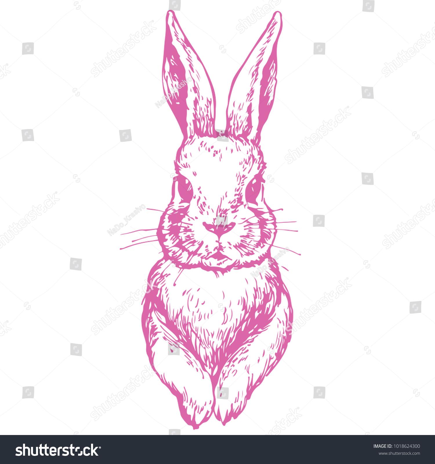 Bunny Cute Rabbit Animal Ink Hand Stock Vector (Royalty Free ...