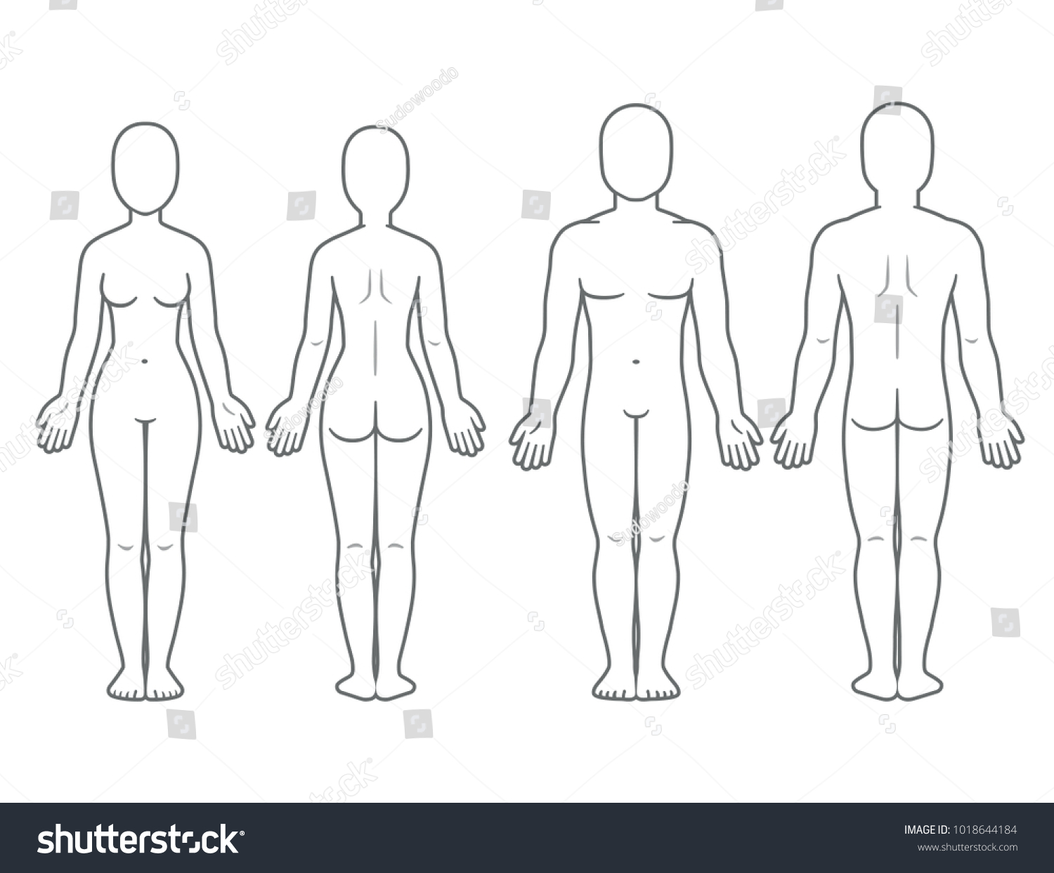 male female body front back view stock vector royalty free