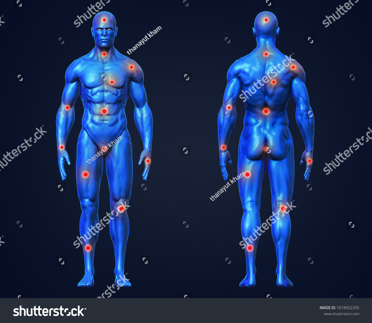 3 D Rendering Conceptual Human Muscle Anatomy Stock Illustration ...