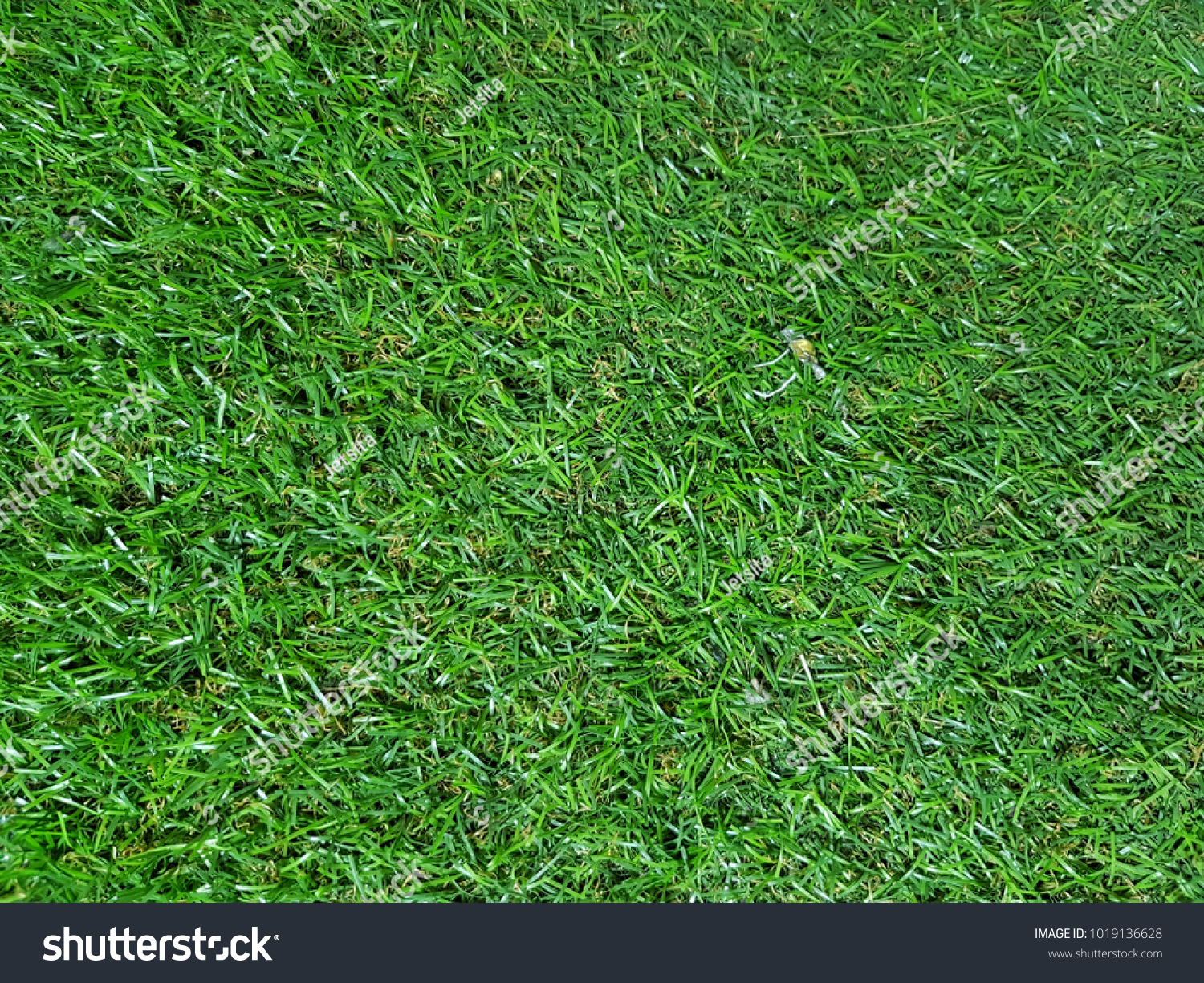 artificial grass texture. Close Up Of Artificial Grass Background Texture Made From Plastic
