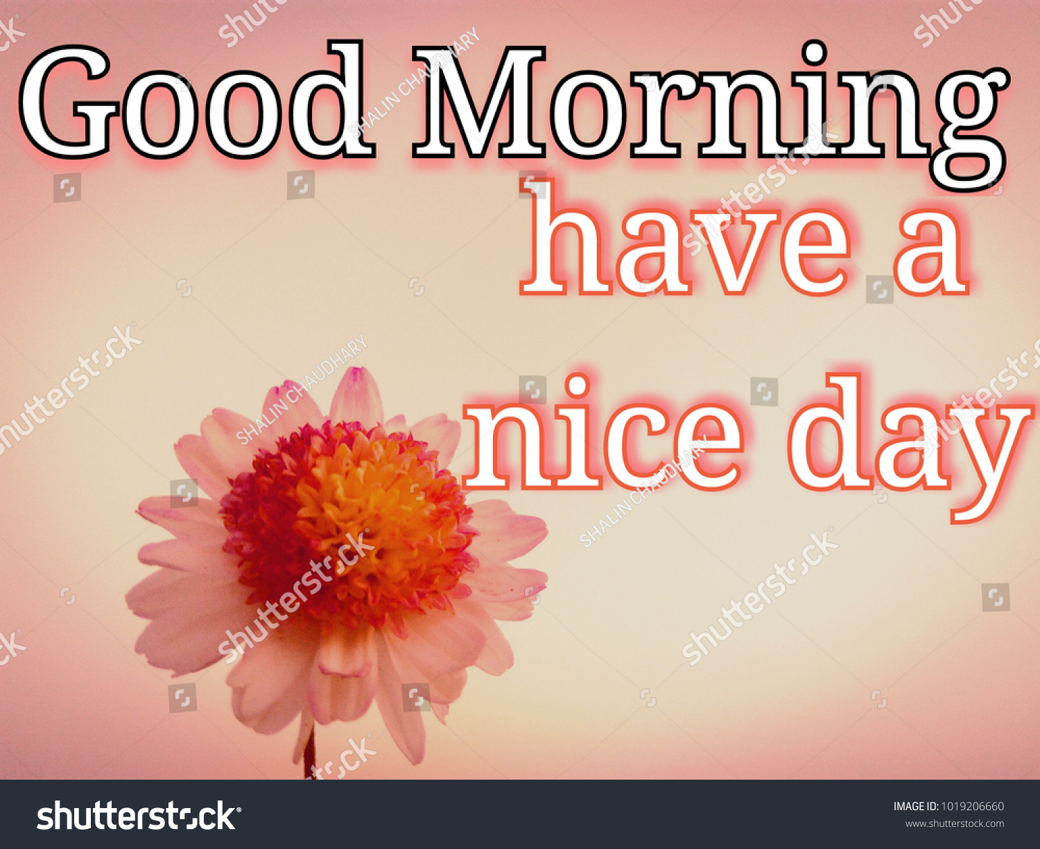 Text Good Morning Have Nice Day Stock Photo Edit Now 1019206660