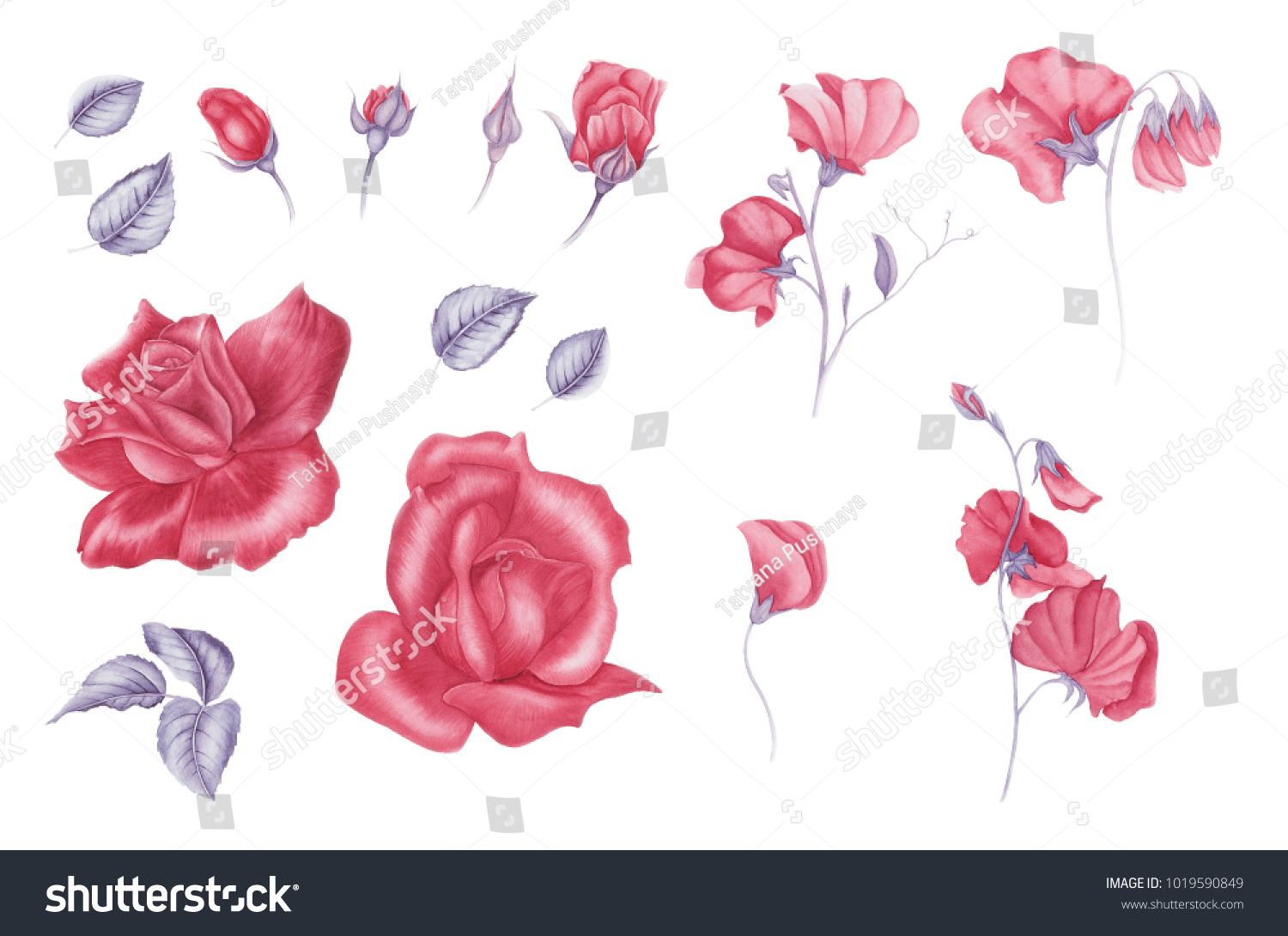Set Vintage Pink Flowers Sweet Peas And Roses And Leaves