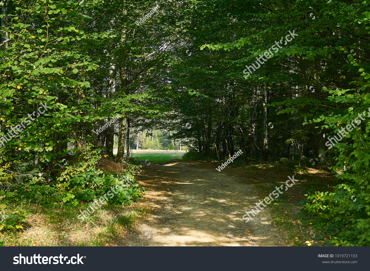Slender Tall Trees Forest Yellowgreen Color Stock Photo (Royalty ...