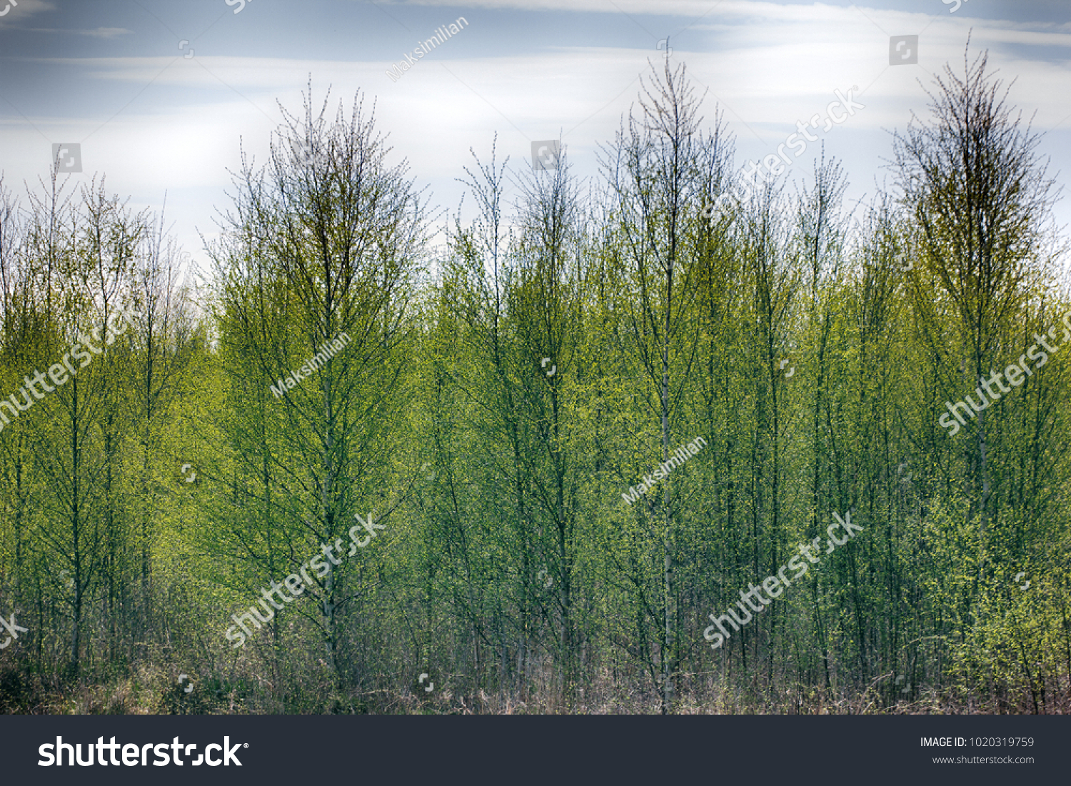 Pleasing Man Spring Young Bright Green Stock Photo 1020319759 ...
