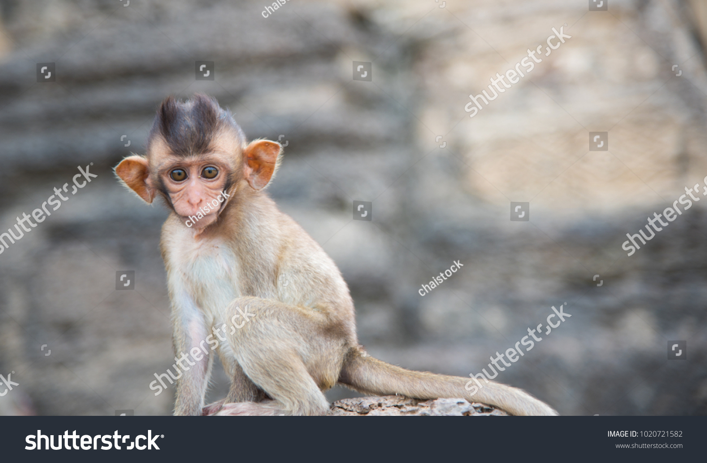 Cute Baby Monkey Group Monkeys Crabeating Stock Photo Edit Now