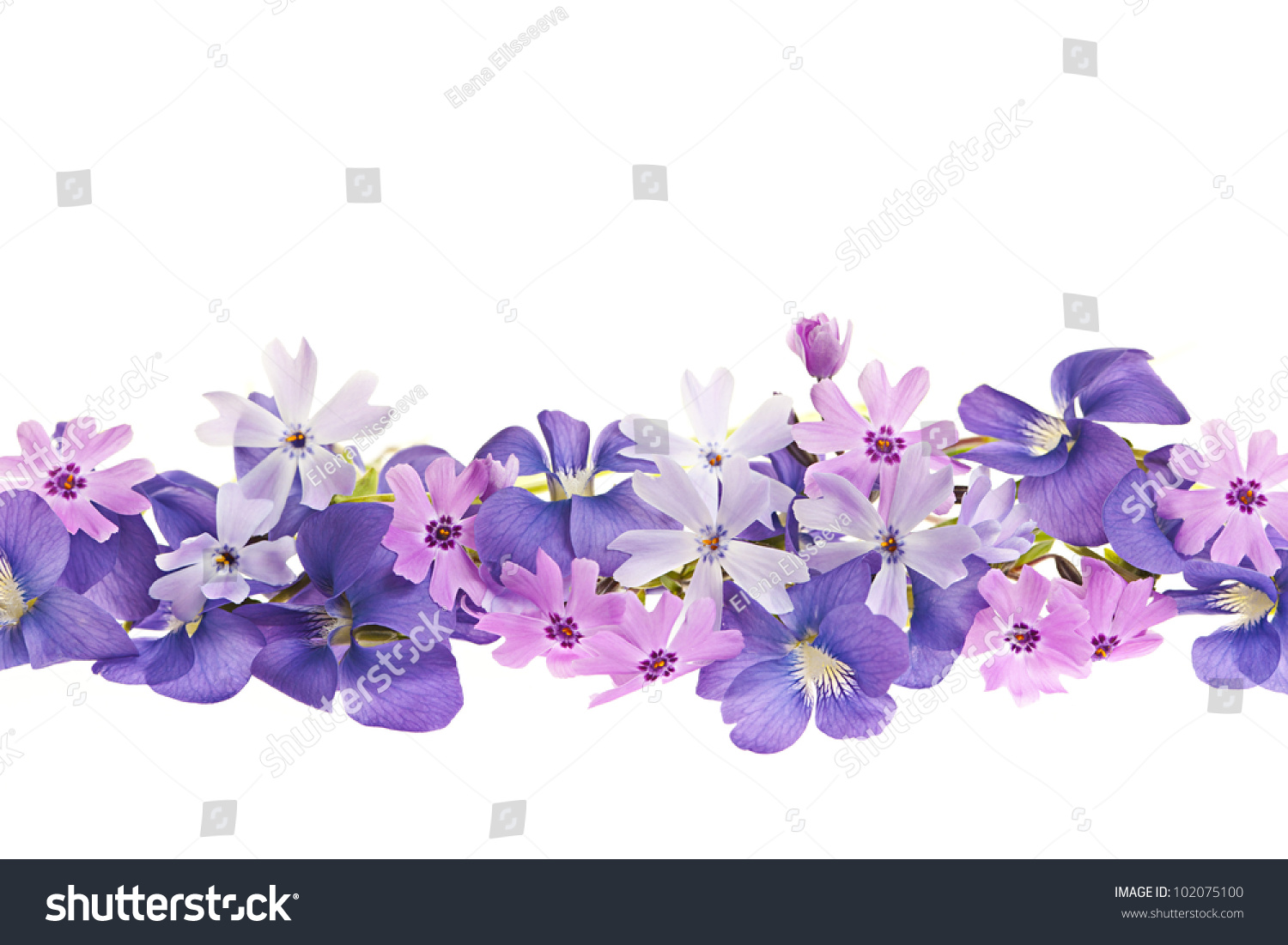 Royalty Free Arrangement Of Purple Violets And Moss 102075100