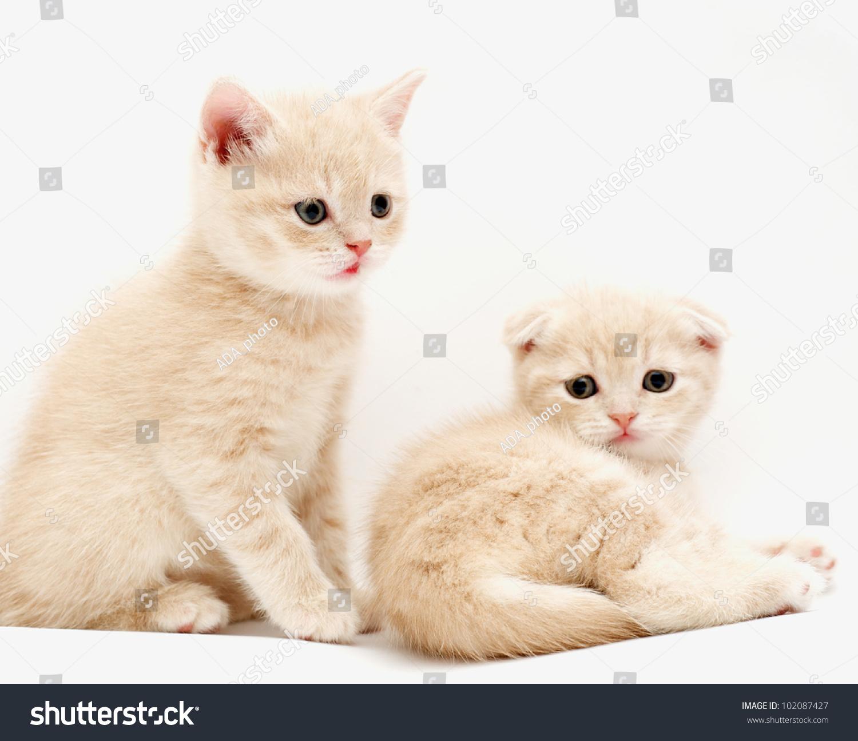 alice in wonderland quotes cheshire cat