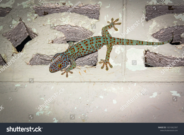 Gecko Lizard On Wall Building Gray Stock Photo (Edit Now
