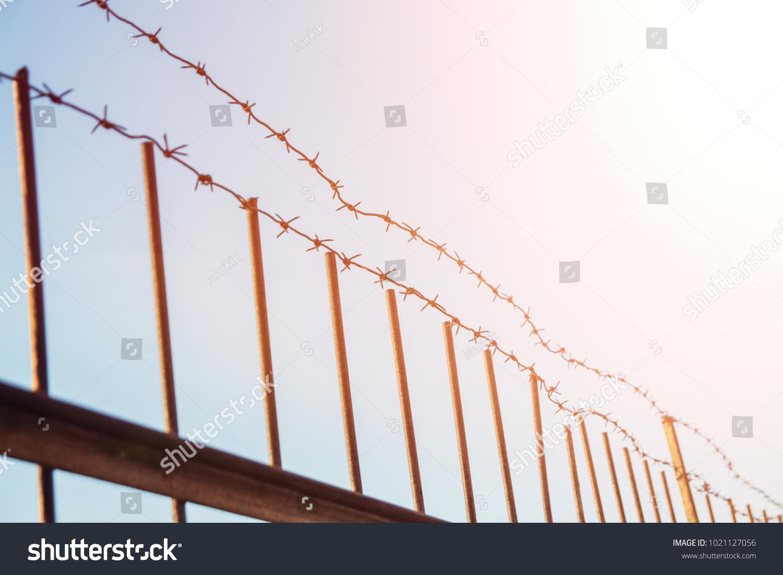 Modern Barbed Wire Wound Festooning - Wiring Diagram Ideas ...