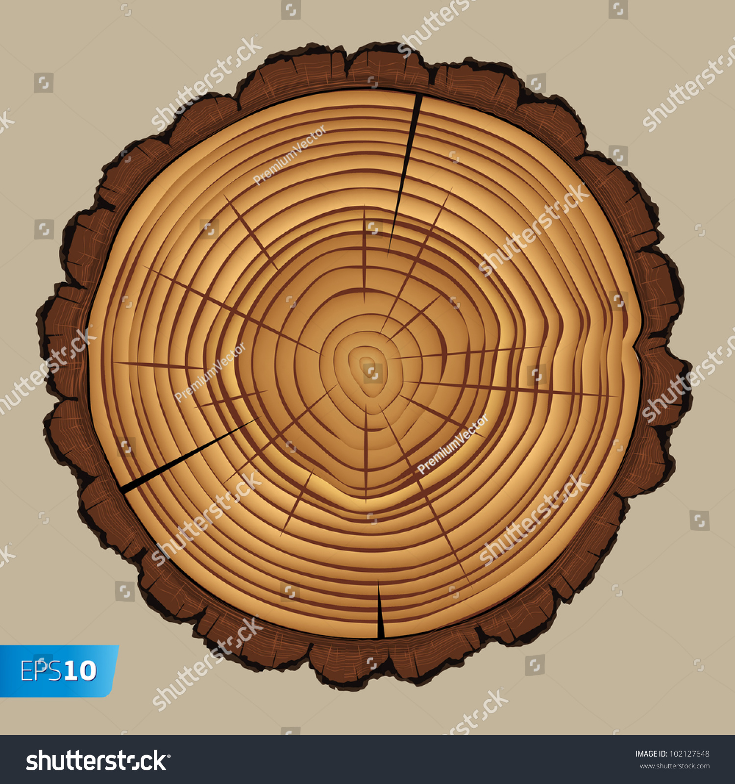 Cross Section Tree Stump Isolated On Stock Vector Royalty