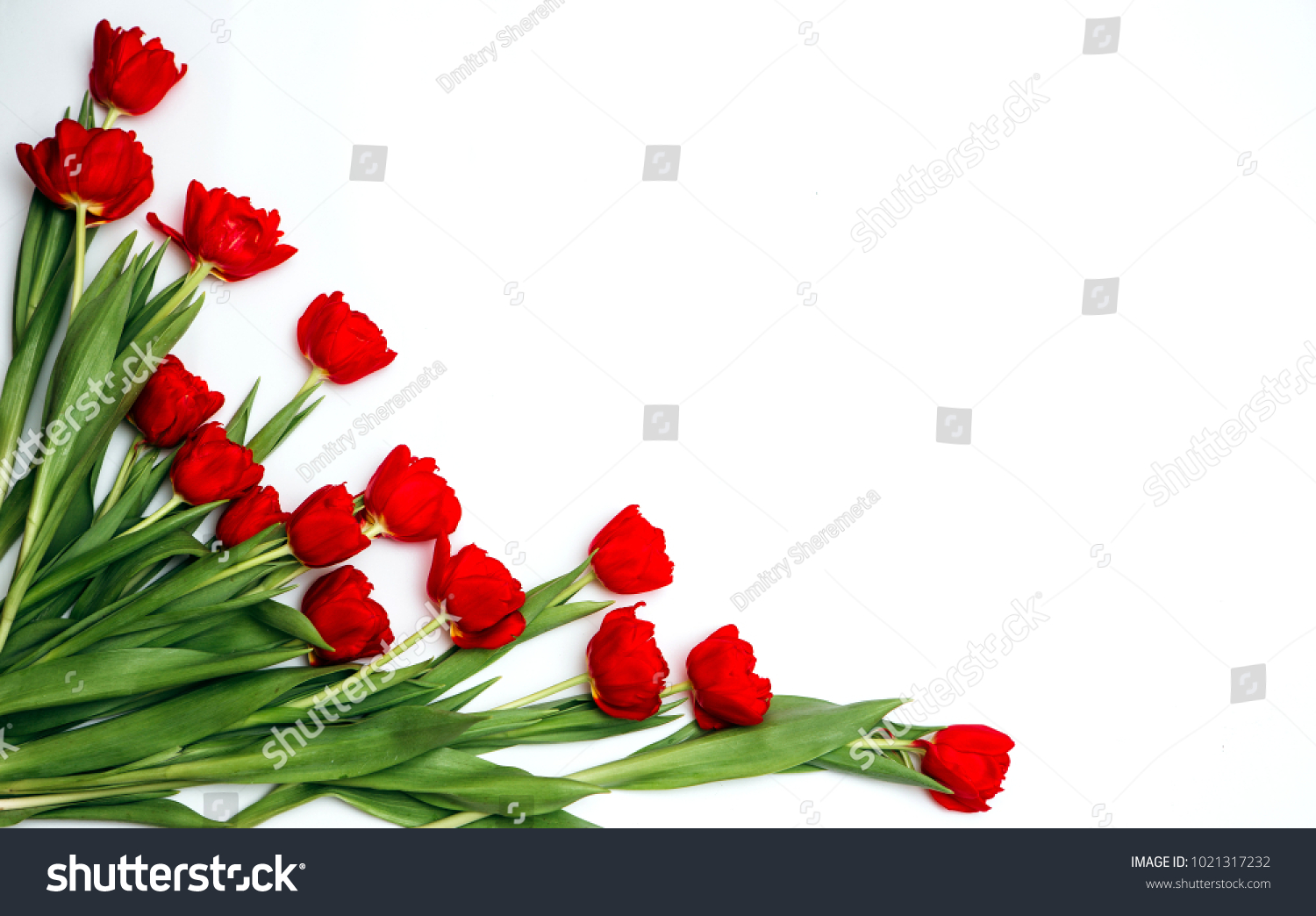 Present Card Tulip Flowers Corners Template Stock Photo (Download ...