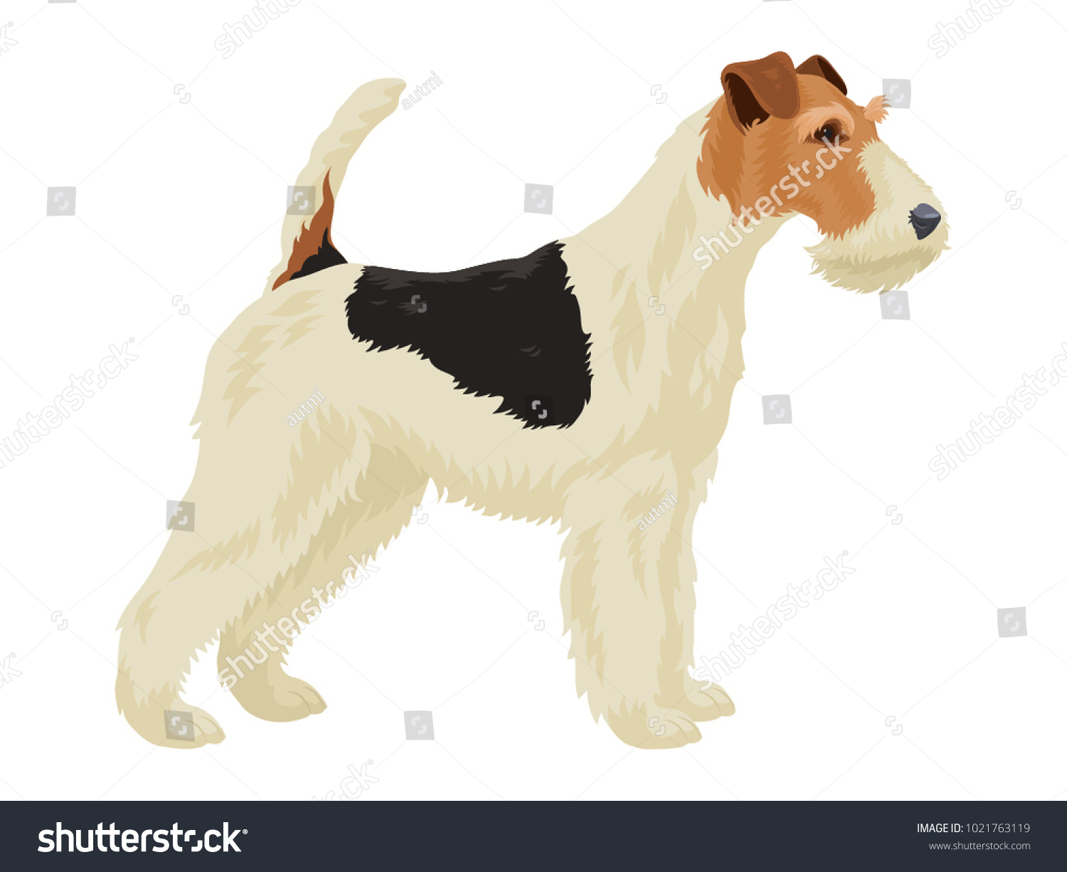 Wire Fox Terrier Isolated On White Stock Vector (2018) 1021763119 ...
