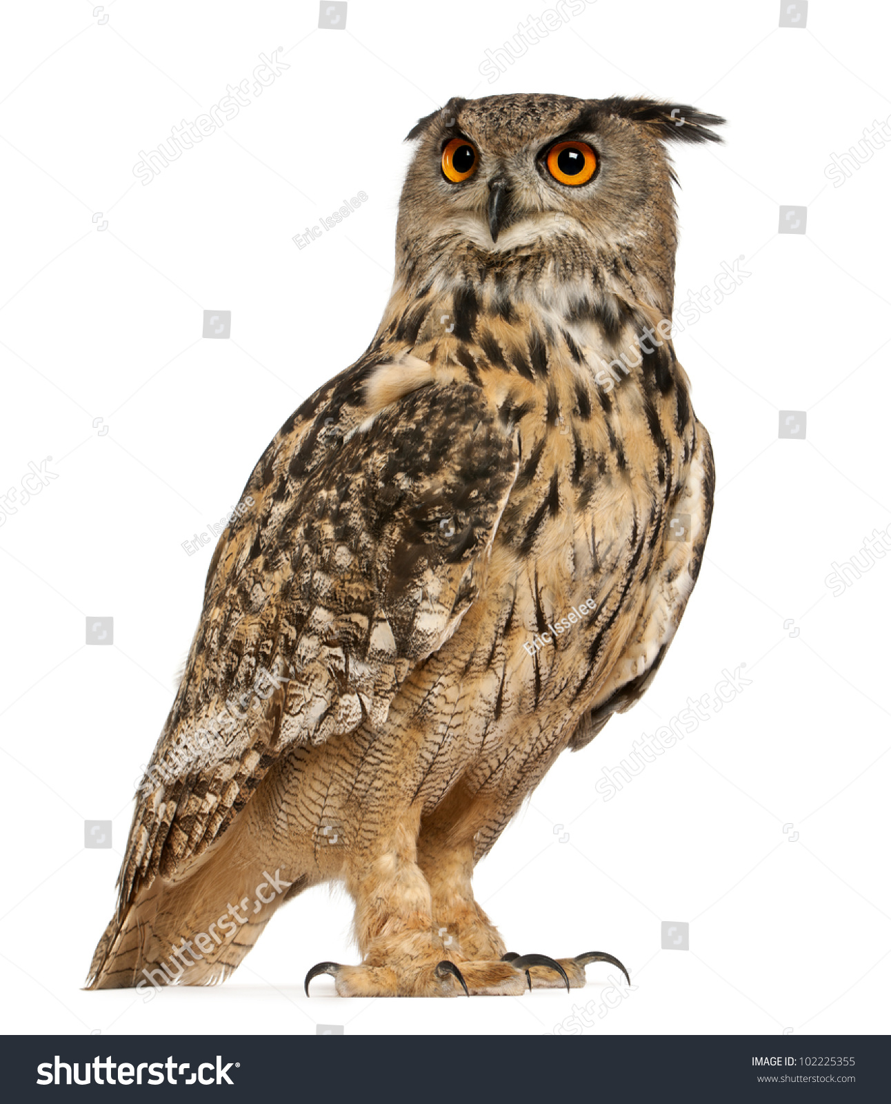 Free Eagle Owl Clipart and Vector Graphics page 6