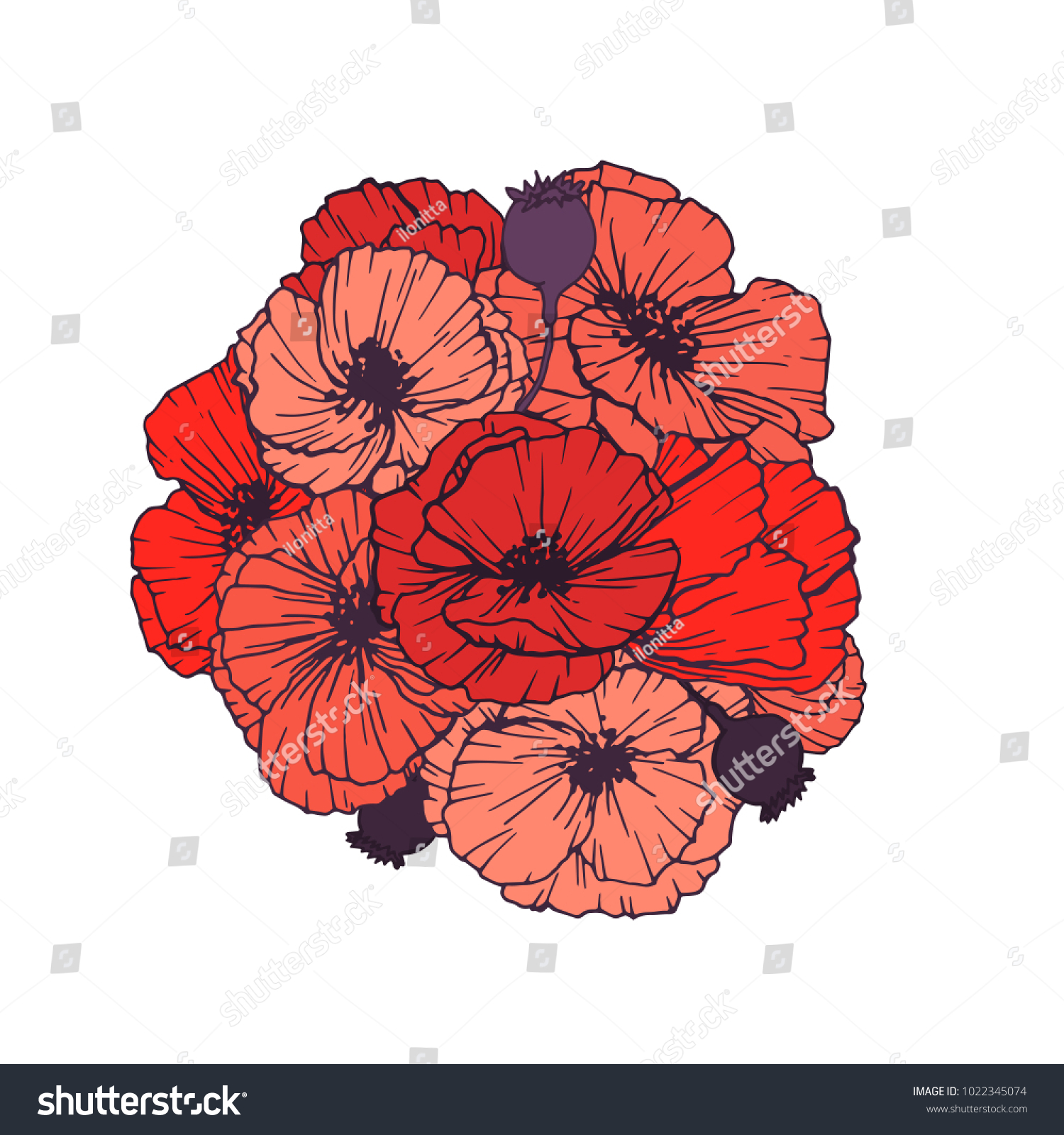 Bouquet Red Poppies Flowers Vintage Colors Stock Vector 1022345074 ...