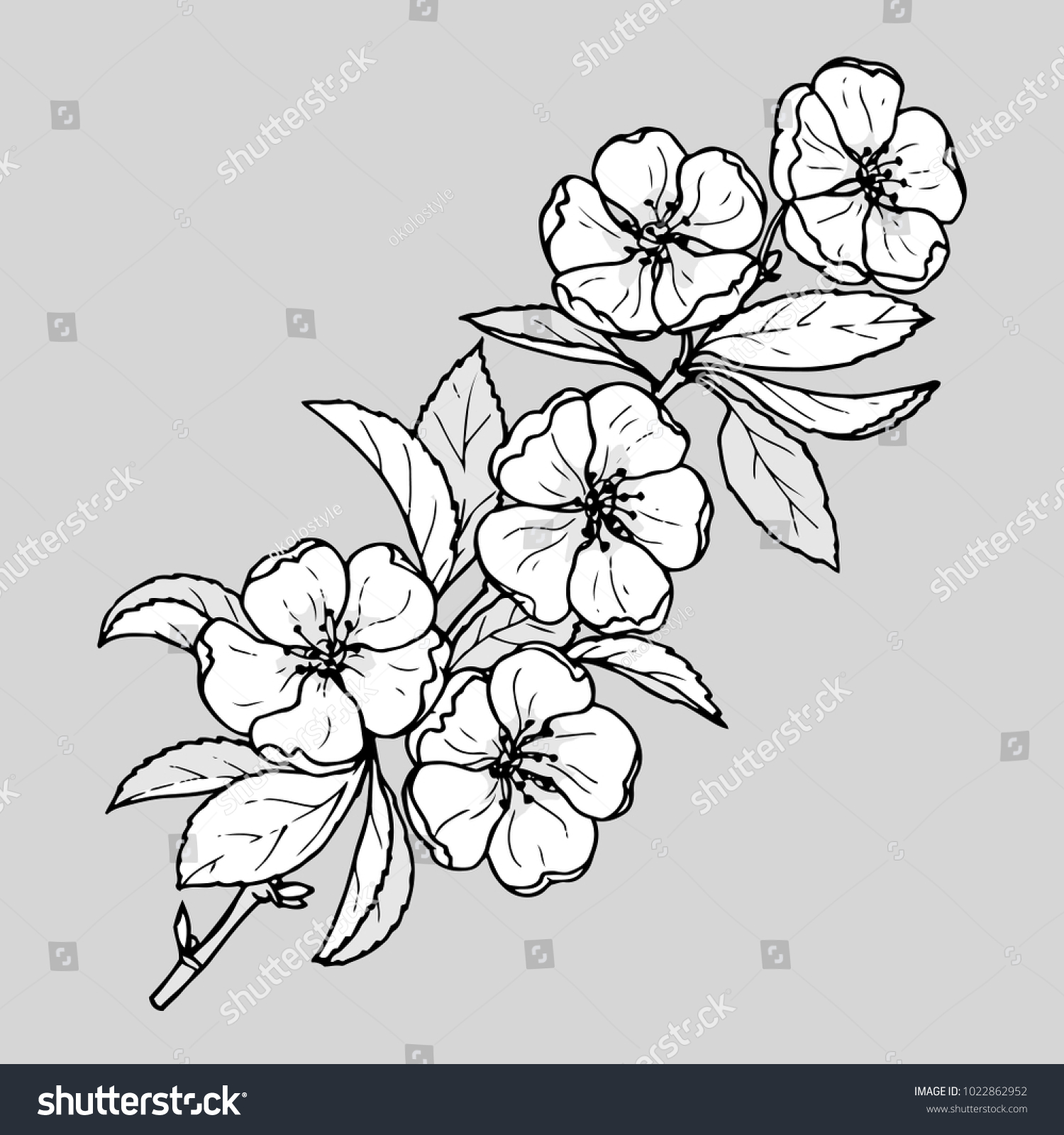 Ink Pencil Black White Flower Sketch Transparent Stock Vector
