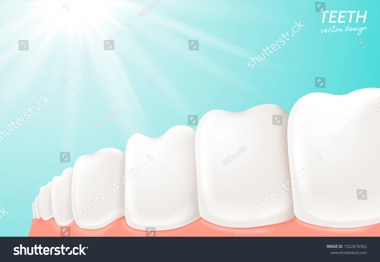 Human Teeth Gum Anatomy Clean White Stock Vector 1022876962 ...