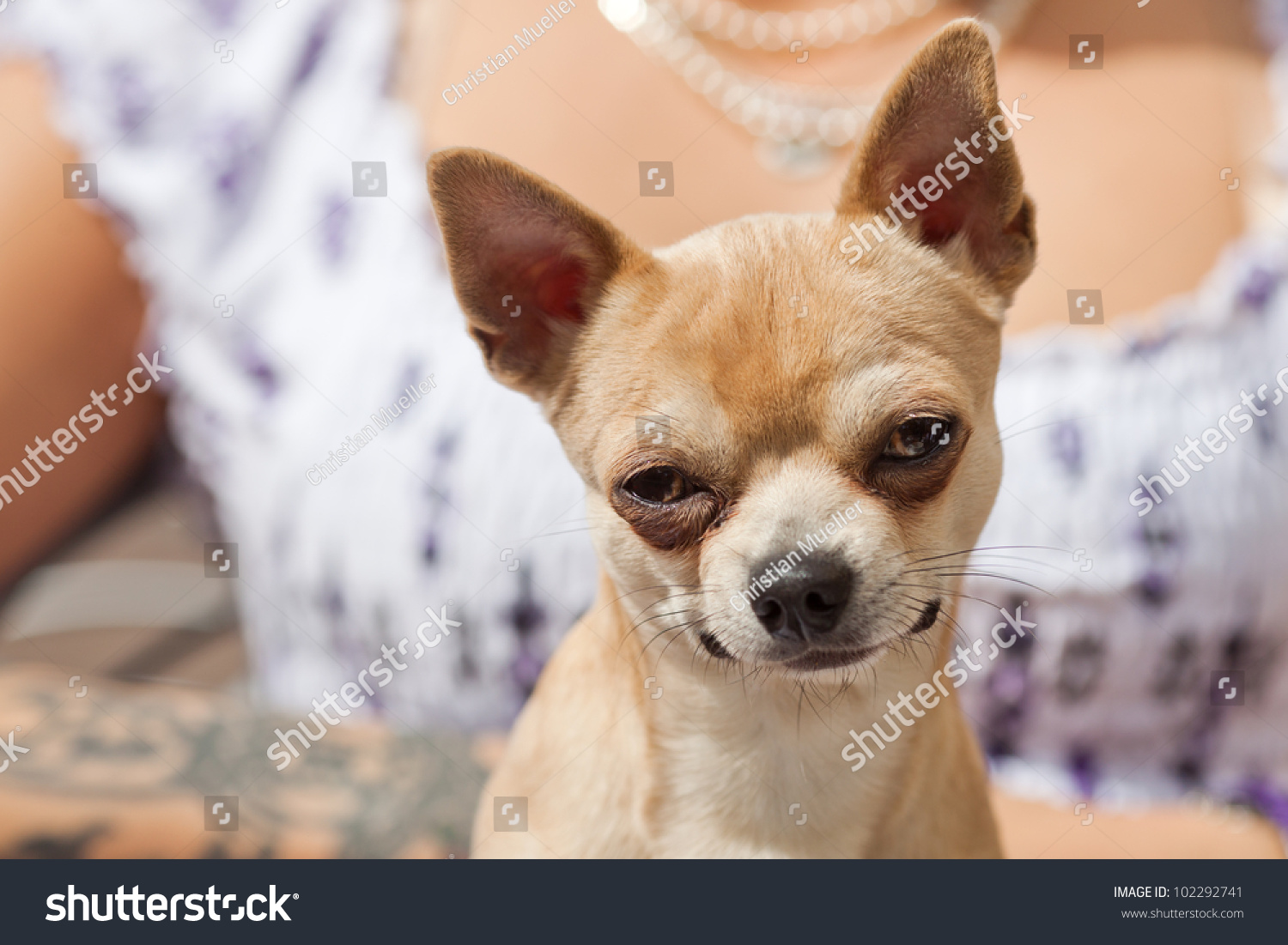 Picture Funny Looking Dog Blinking Eyes Stock Photo - Dogs looking funny with toys
