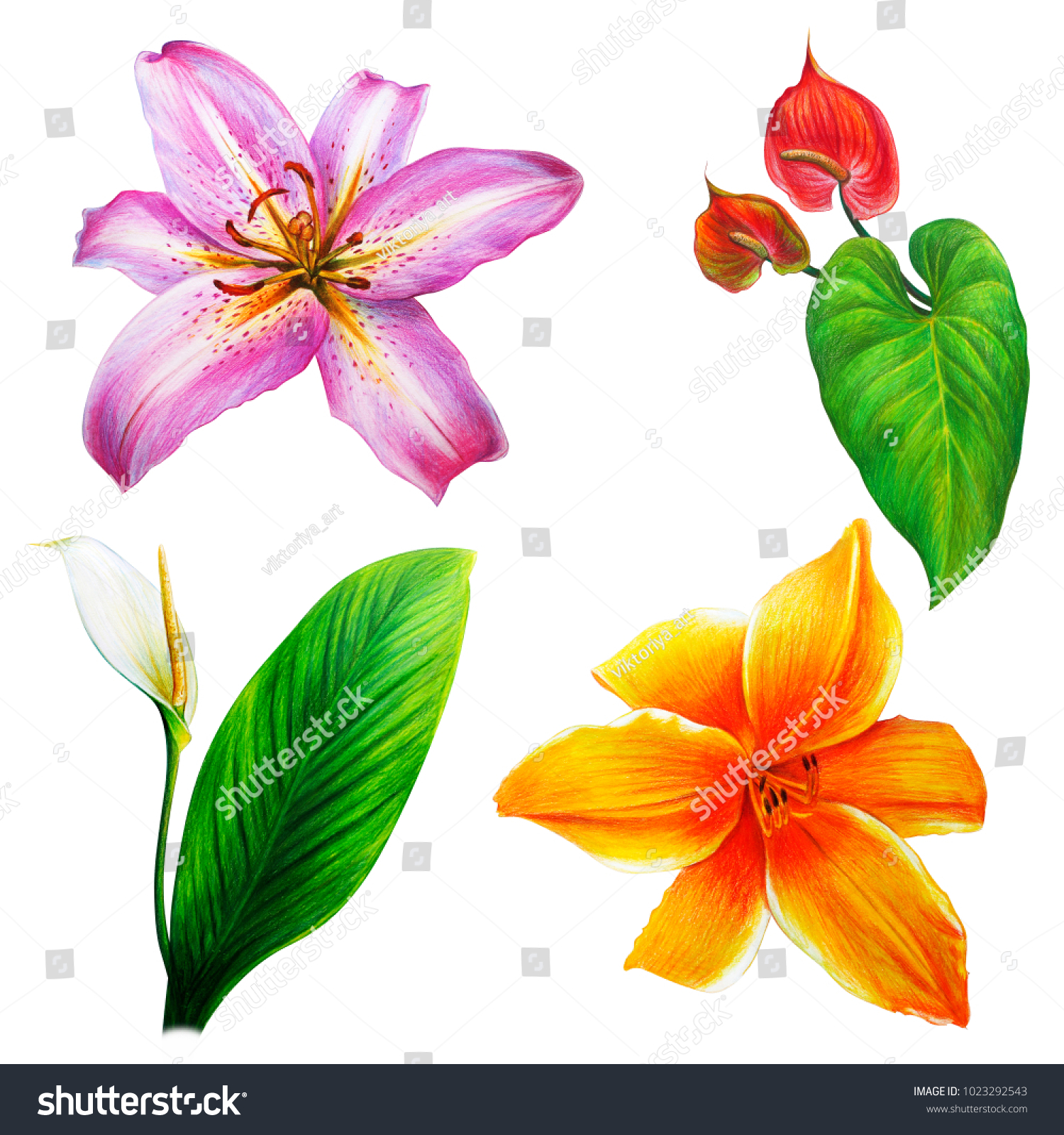 Large Different Lilies Tropical Flowers Stock Illustration