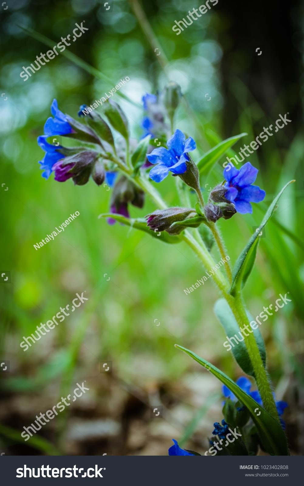 Small Blue Flower Closeup Blue Summer Stock Photo Edit Now