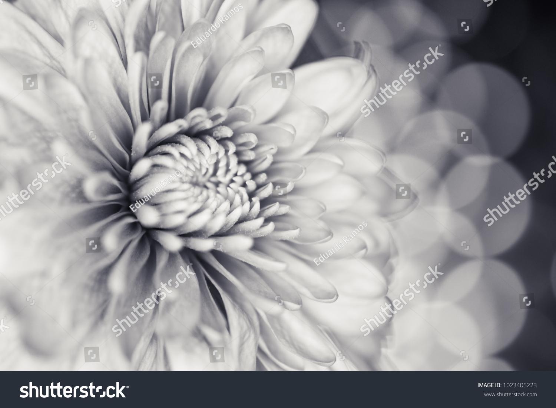 Black White Flower Lights Stock Photo Edit Now 1023405223