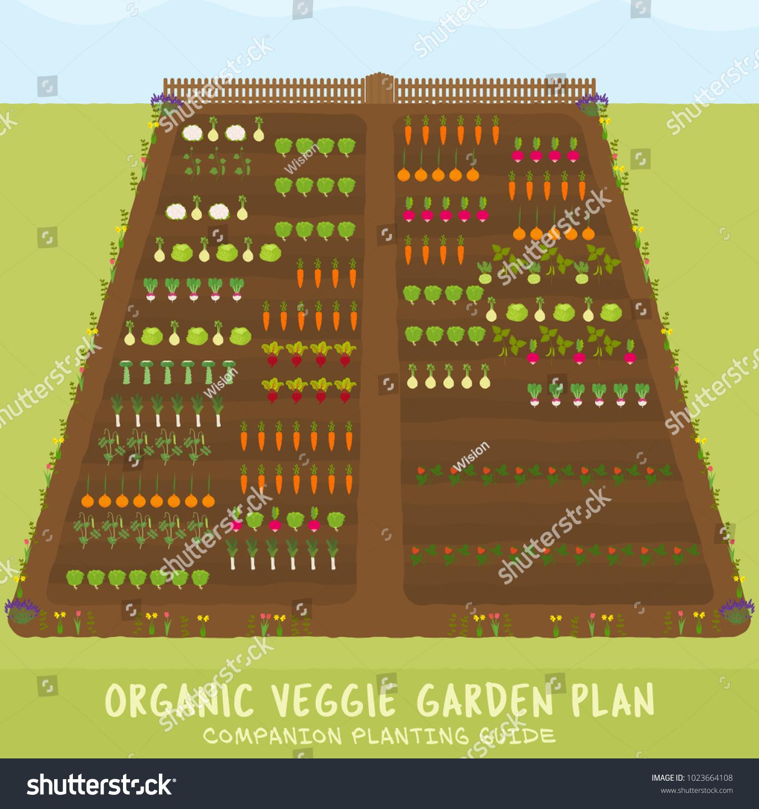 Organic Veggie Garden Plan Companion Planting Stock Vector (Royalty ...