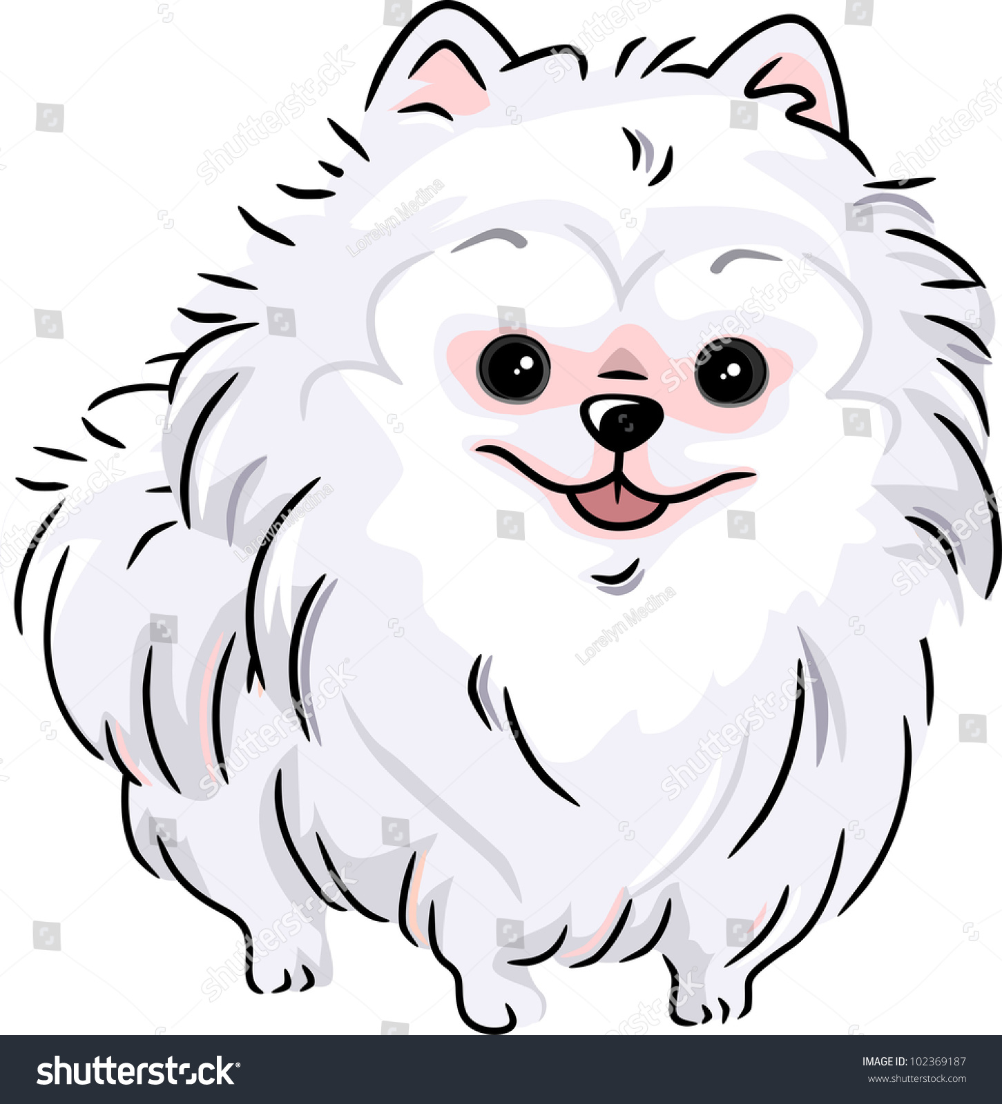 pomeranian vector illustration featuring a white pomeranian 102369187 2699