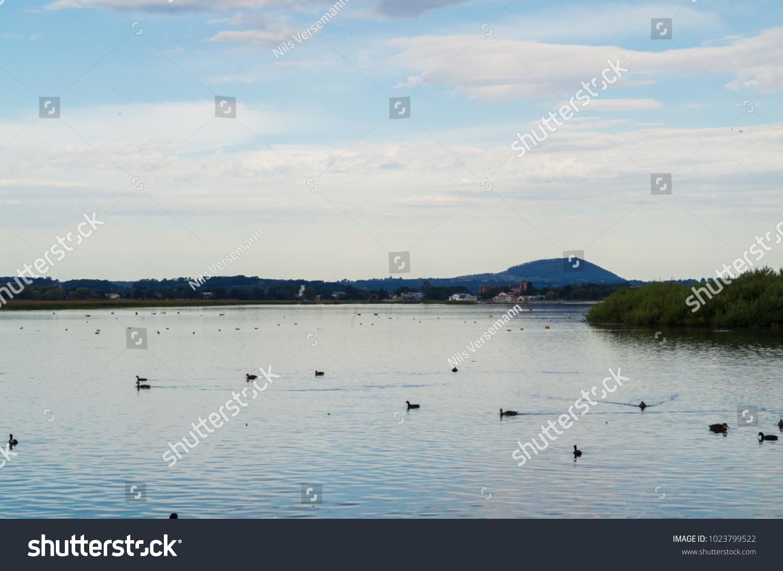 Waterbirds On Lake Wendouree Ballarat Victoria Stock Photo
