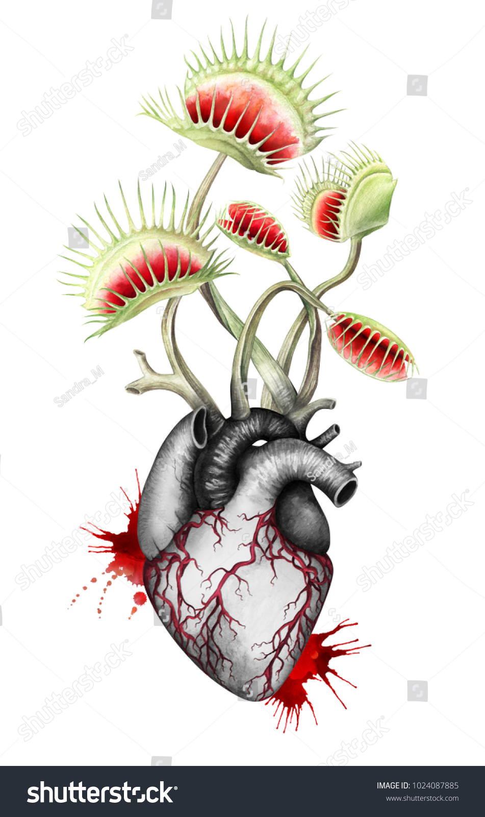 Hungry Black White Heart Fly Traps Stock Illustration 1024087885 ...