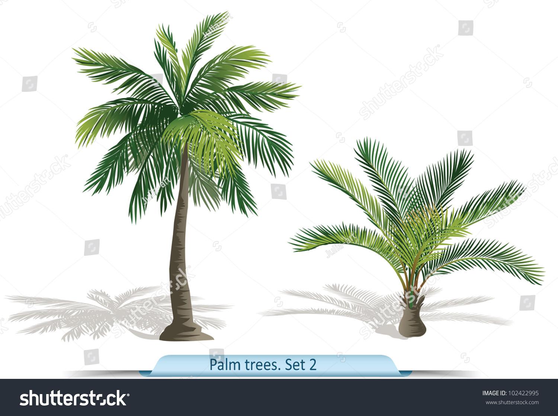 vector set palm trees part 2 stock vector 102422995 shutterstock