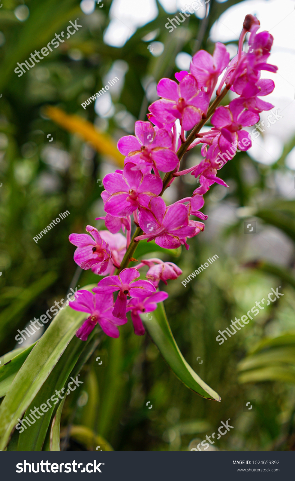 Beautiful tropical flowers ez canvas id 1024659892 izmirmasajfo
