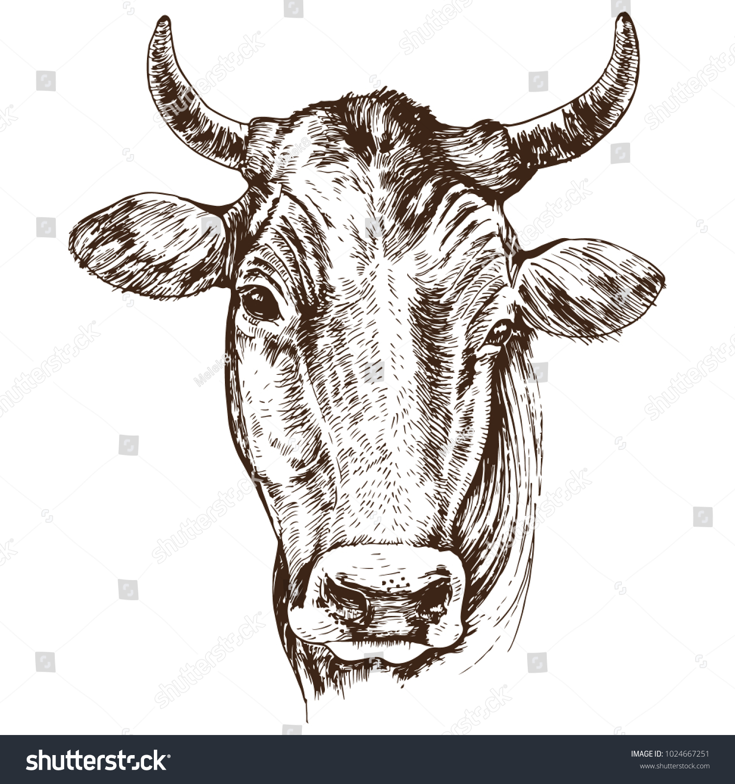Hand Drawn Cow Head Isolated On Stock Vector 1024667251 - Shutterstock