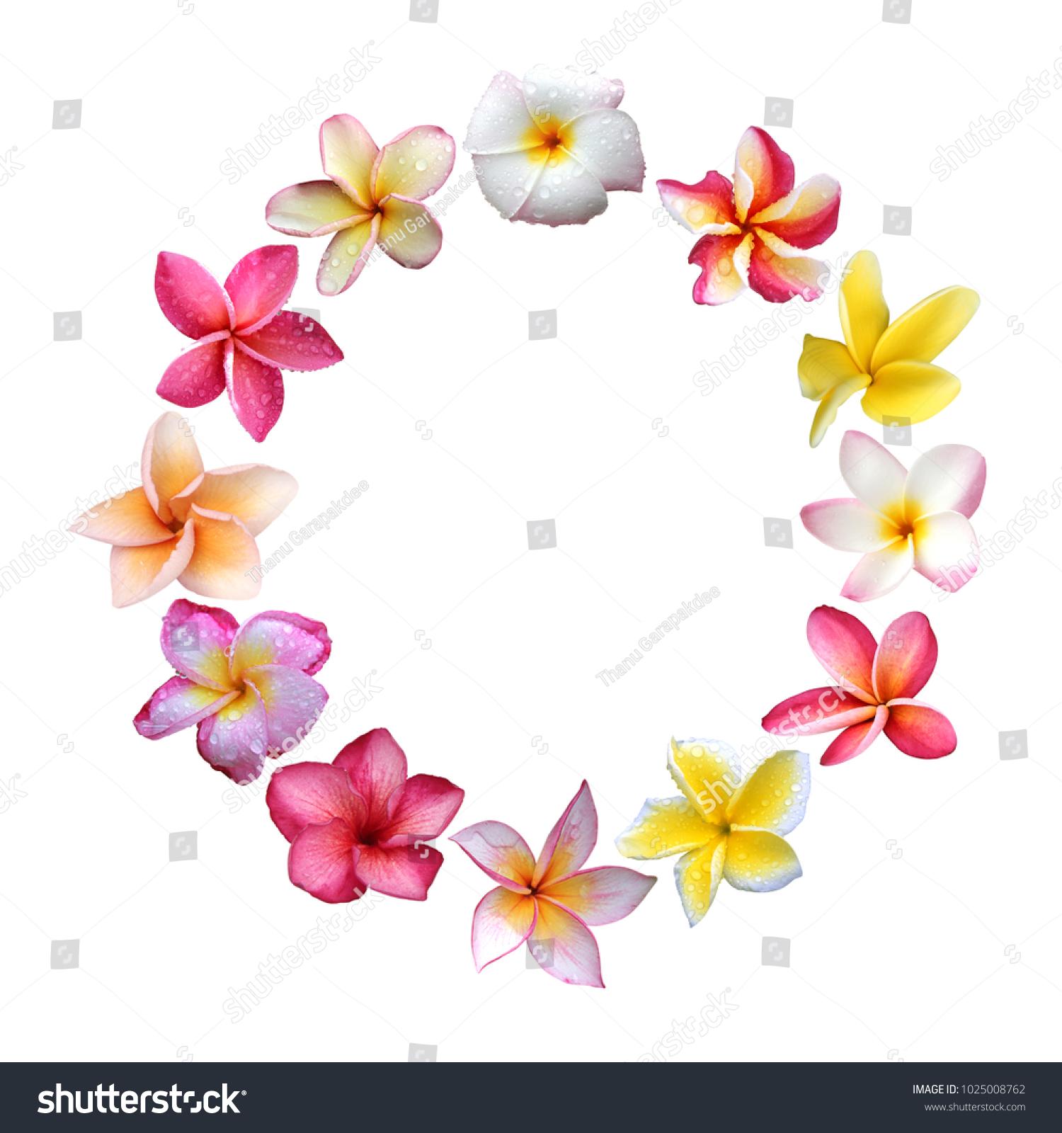 Plumeria Wreath Plumeria Frame Flowers On Stock Photo (Edit Now ...