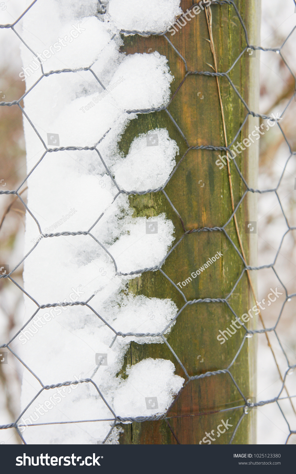 Awesome Chicken Wire Fence Post Photos - Wiring Schematics and ...