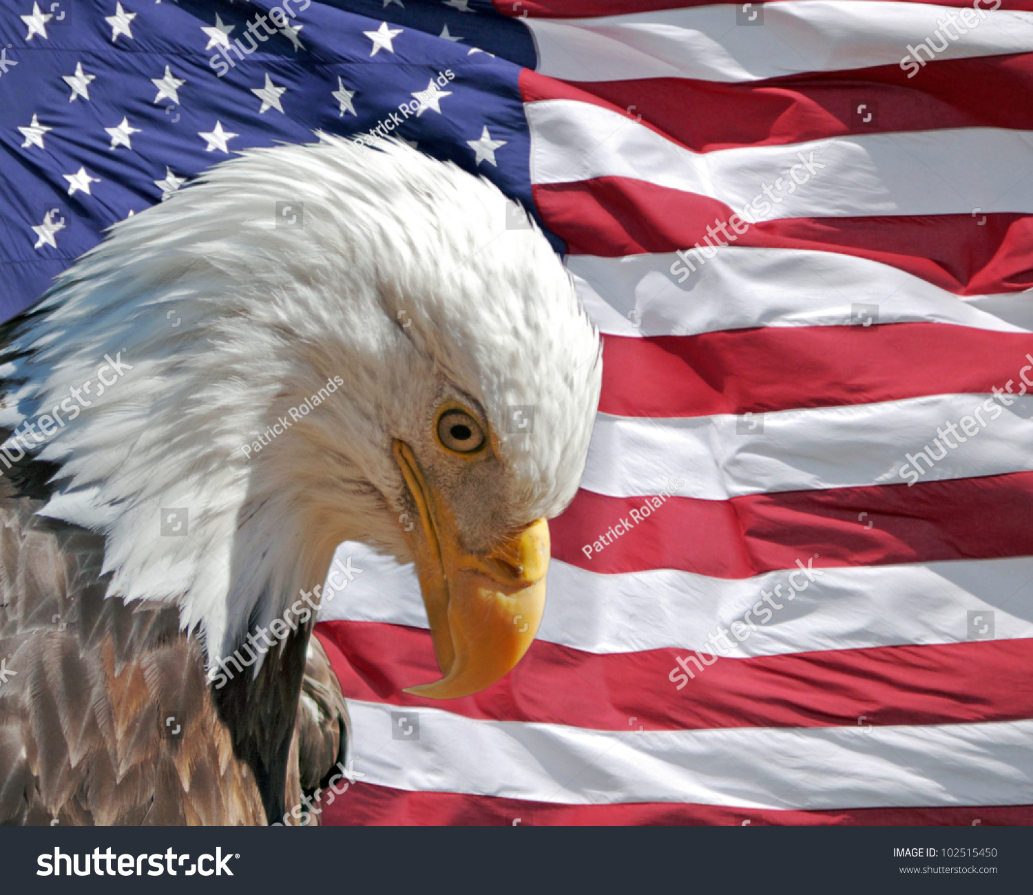 Bald Eagle American Flag Constitution