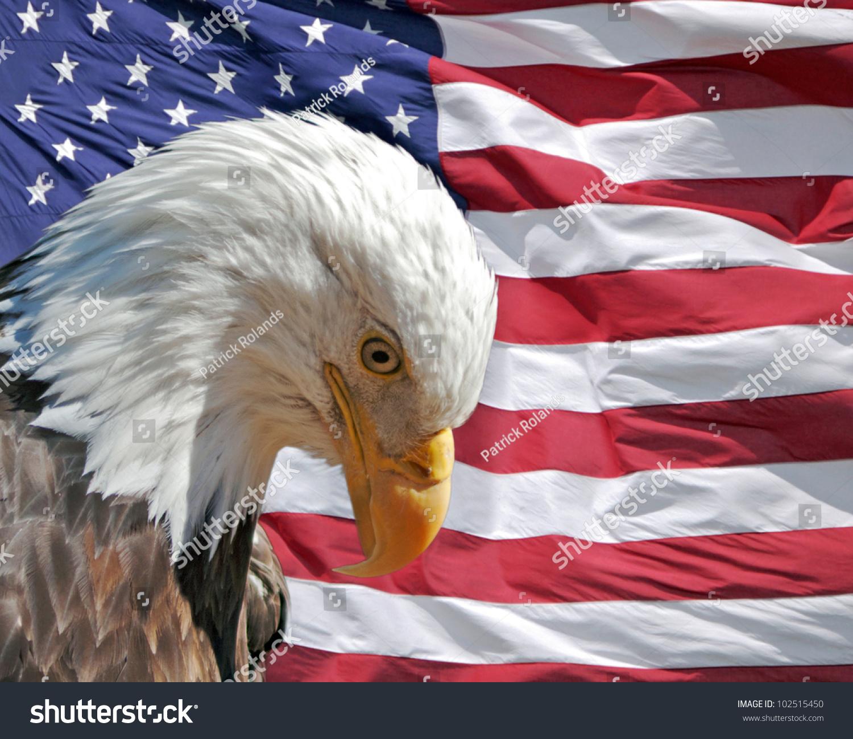 Bald eagle head front - photo#22