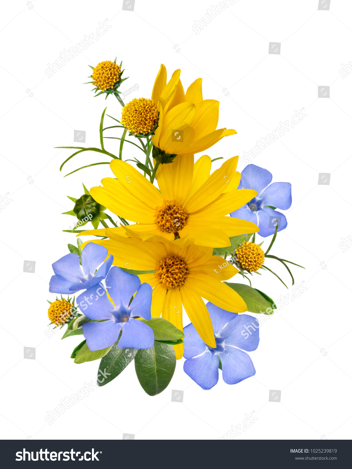 Yellow and blue wild primrose flowers bouquet isolated on white id 1025239819 izmirmasajfo