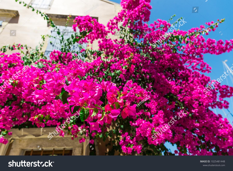 Beautiful mediterranean flowers in kefalonia island greece ez canvas id 1025481448 mightylinksfo