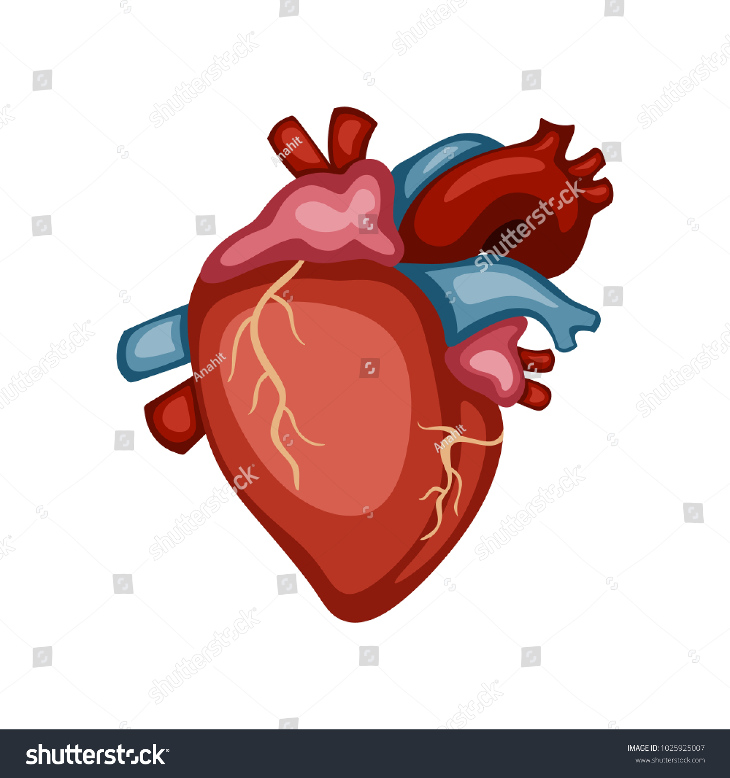 Human Anatomy Heart 3d Realistic Illustration Of Crayons With