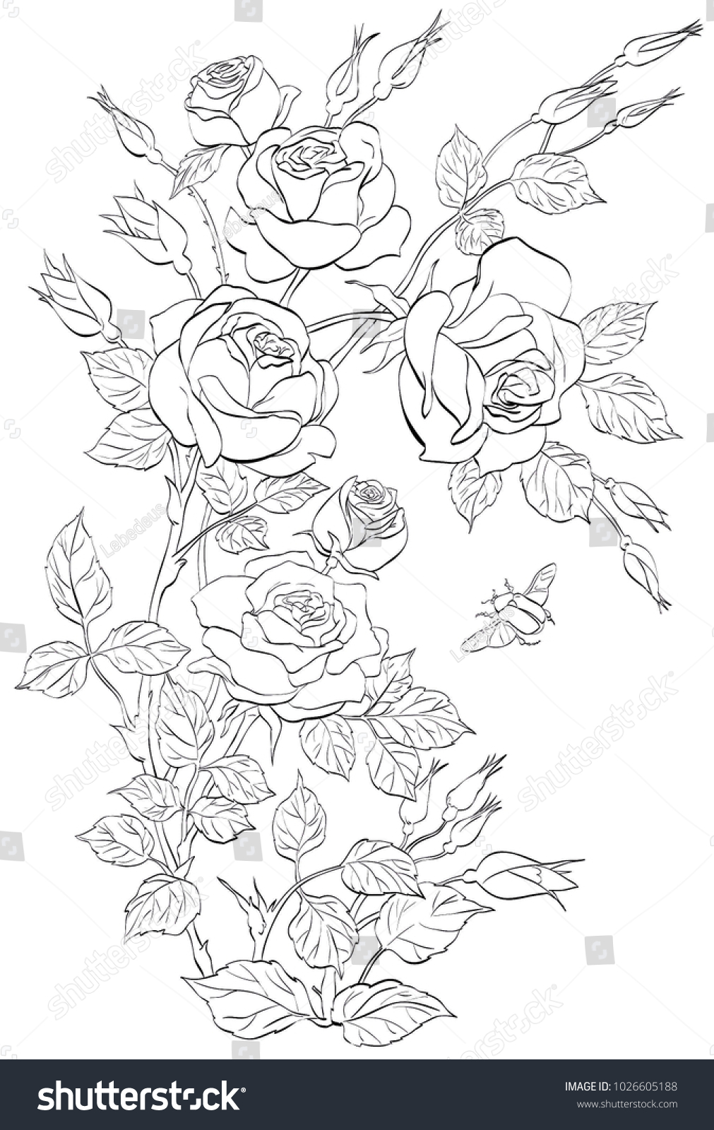 Vector Outline Bouquet Roses Line Art Stock Vector Royalty Free