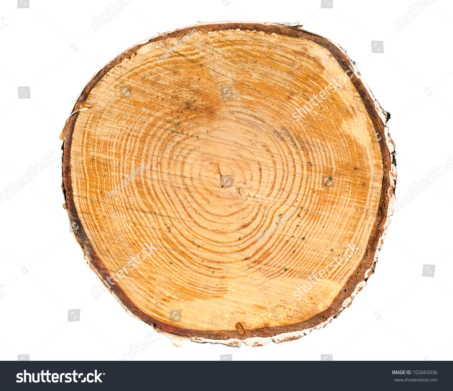 Cross Section Tree Trunk Isolated On Stock Photo 102665036 ...