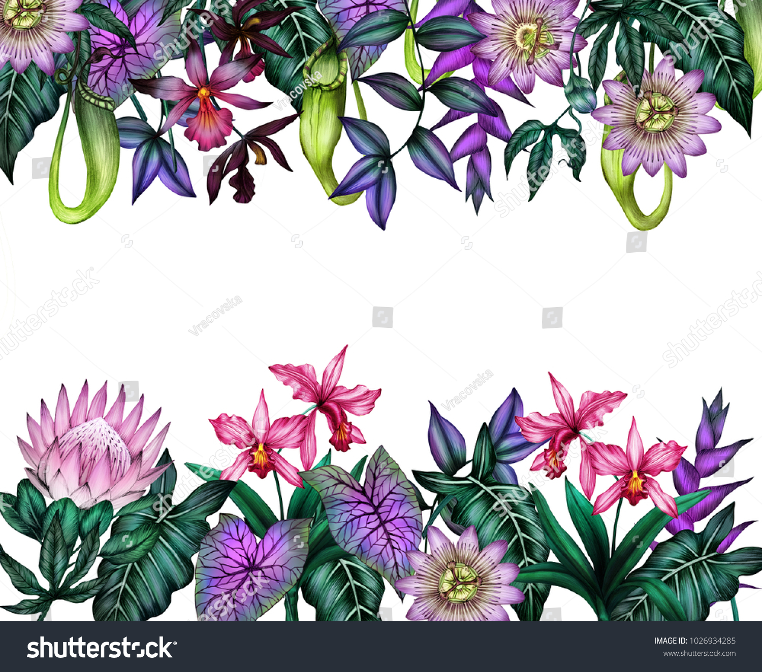 Tropical Flowers Border Tropical Plants Frame Stock Illustration