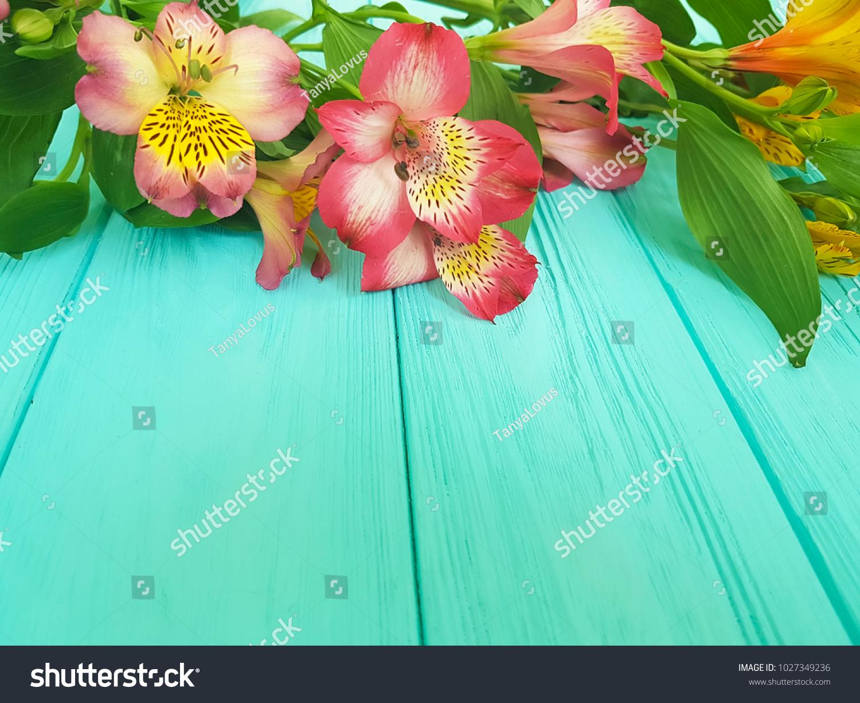 Alstroemeria flower on blue wooden background stock photo edit now alstroemeria flower on a blue wooden background izmirmasajfo