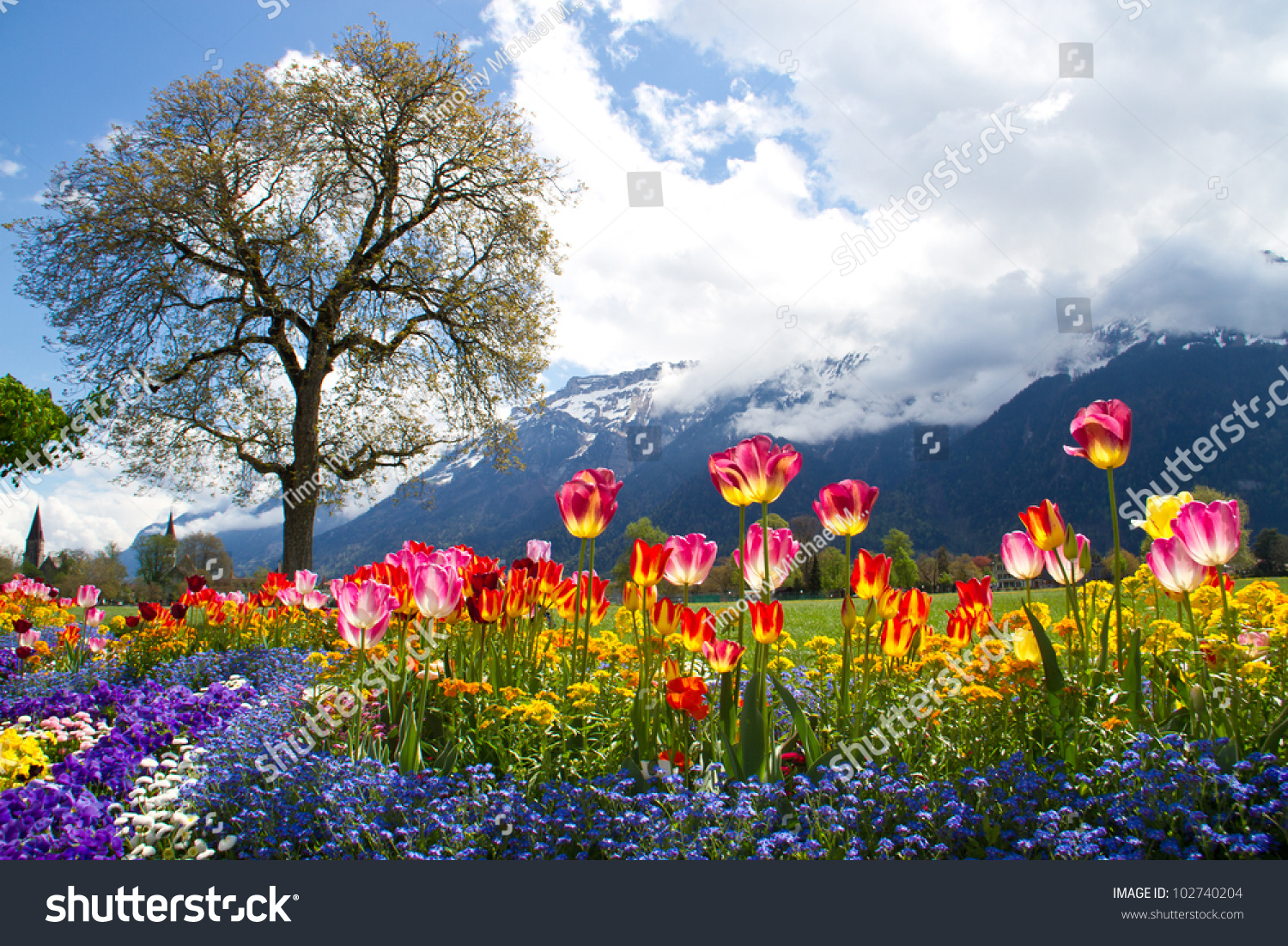 Tulip beds and beautiful landscaping in front of the Swiss Alps. Tulip Beds Beautiful Landscaping Front Swiss Stock Photo 102740204
