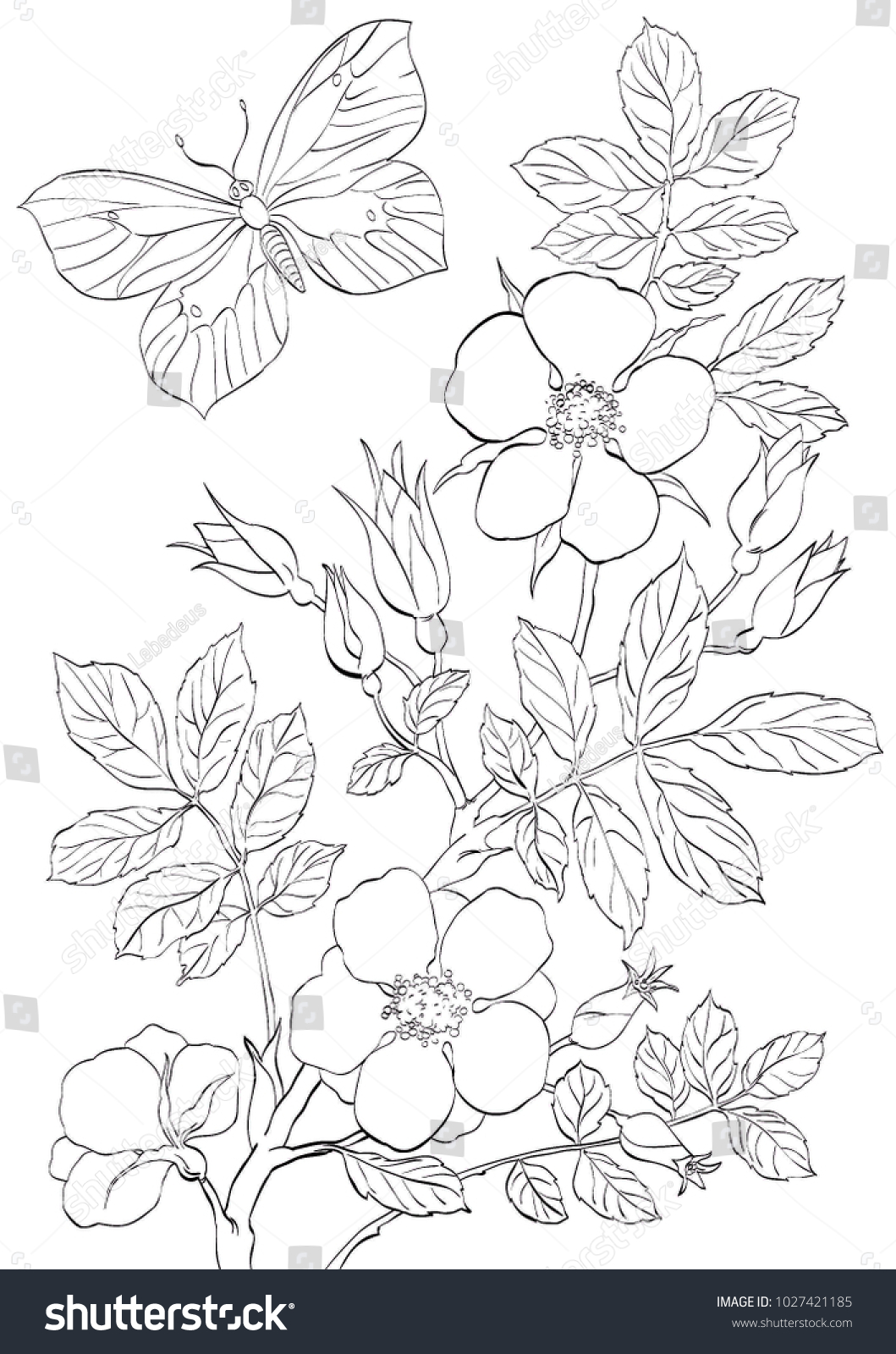 Vector Outline Branch Wild Rose Flowers Stock Vector (Royalty Free ...