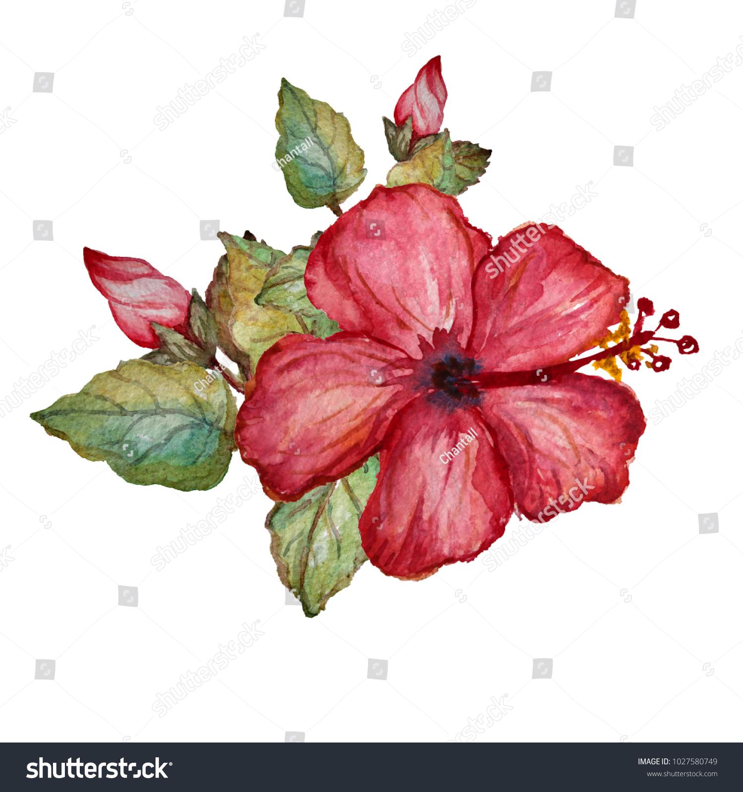 Decorative Watercolor Hibiscus Flowers Clipart Design Stock Photo