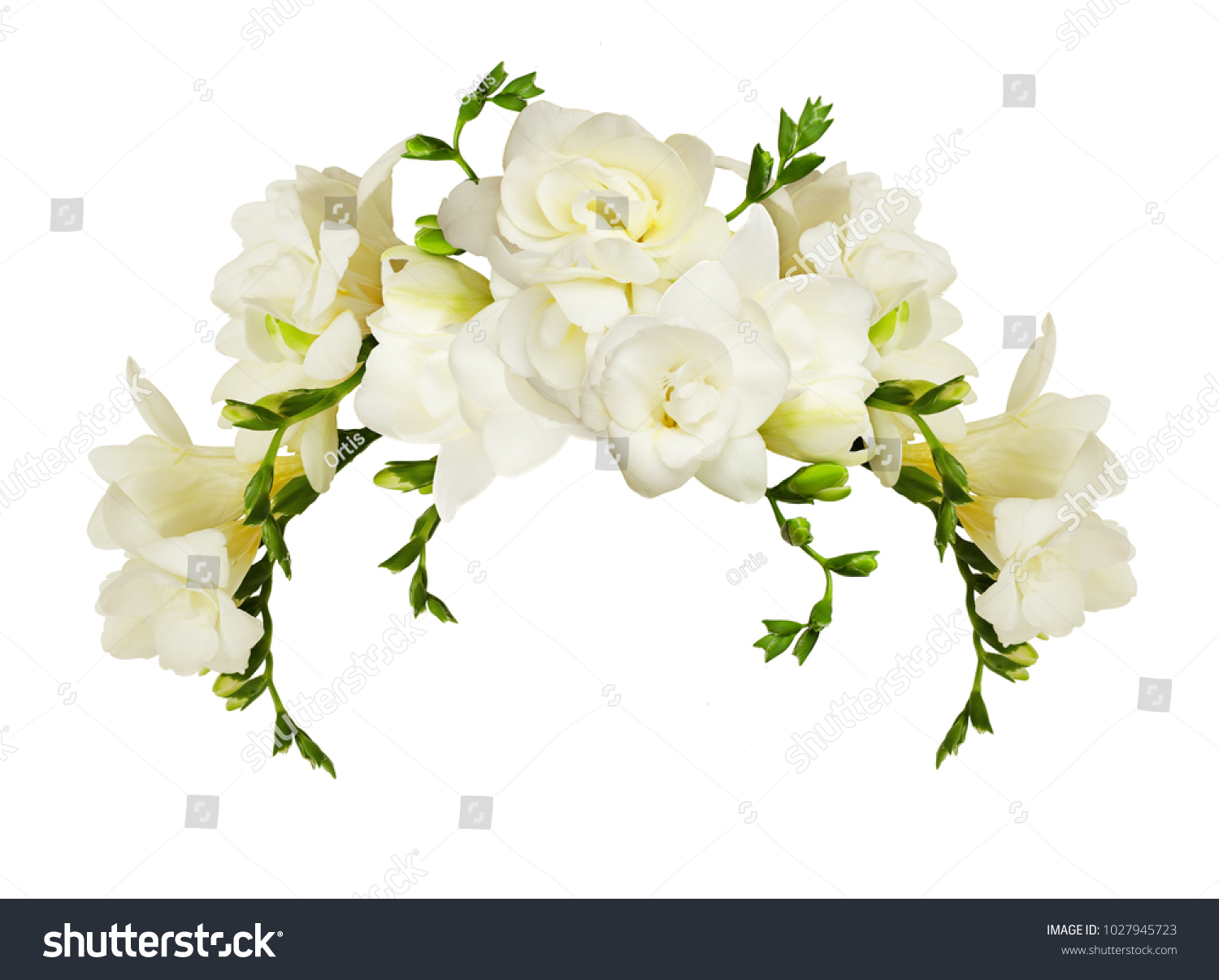 White Freesia Flowers In A Beautiful Arch Arrangment Isolated On
