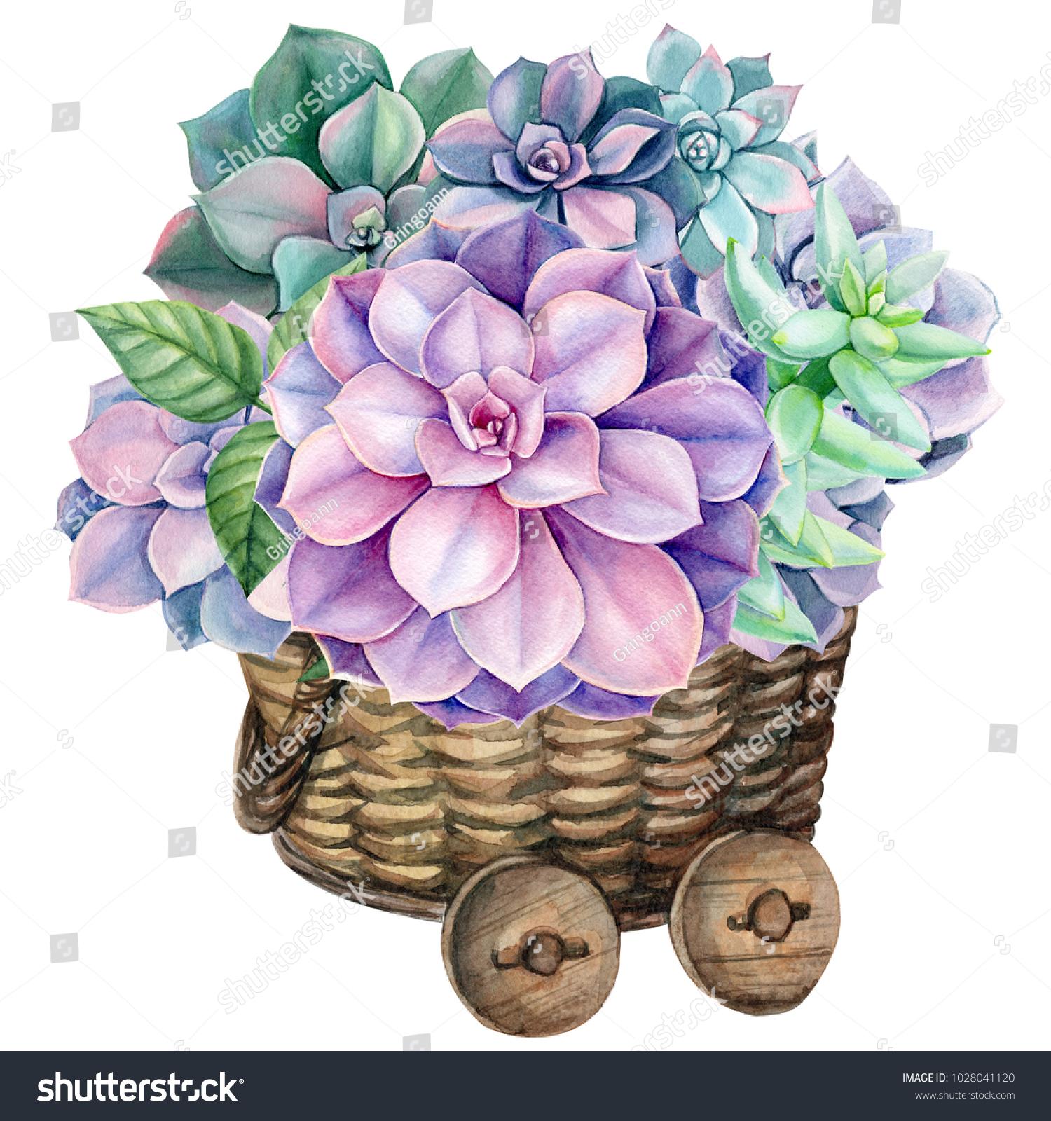Bouquet Succulents Green Purple Plants Echovirus Stock Illustration 1028041120