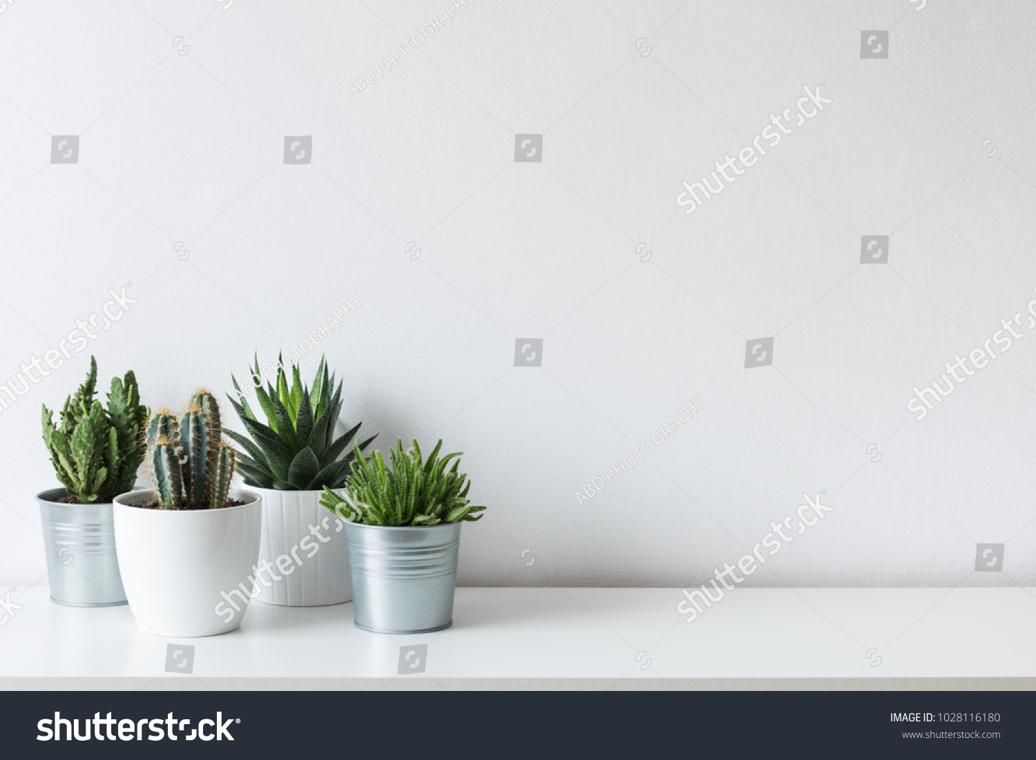 Collection of various cactus and succulent plants in different pots. Potted cactus house plants on white shelf against white wall. #1028116180 - 123PhotoFree.com